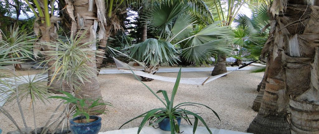 House rental palms garden with hammock