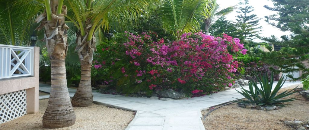 Sidewalk in the garden of Villa Tropica with bougainvillea